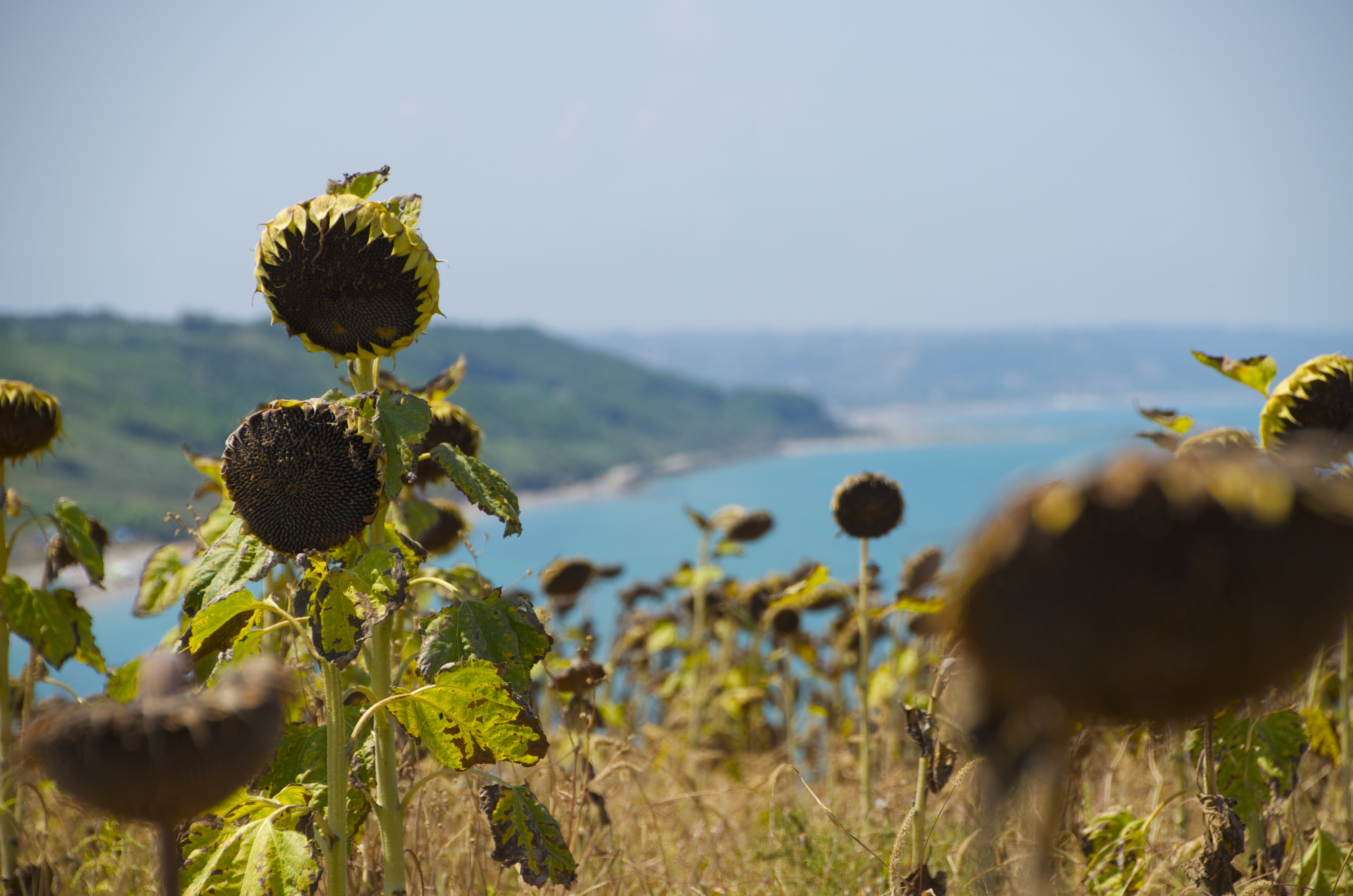 Italy on the road: driving between Marche and Puglia